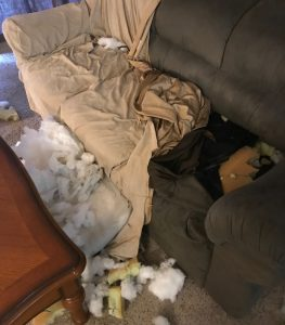 Dogs behave destructively when they are not kept in a dog training crate